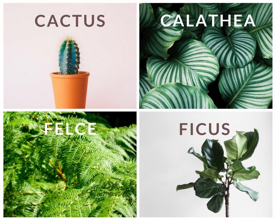 5 Cactus: di ogni varietà e forma, hanno spopolato in tantissimi profili IG. Facili ma non quanto le succulente ;) 6 Calathea: delicata ma di grande effetto è tra le mie preferite ;) Tra le più spettacolari la Calathea Iancifolia 7 Felci: di ogni genere, danno un tocco