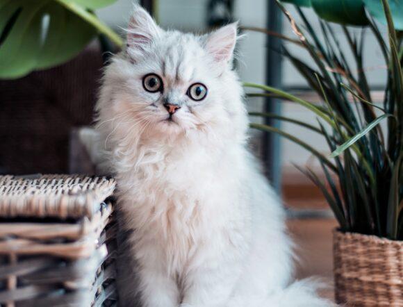 gatti e piante
