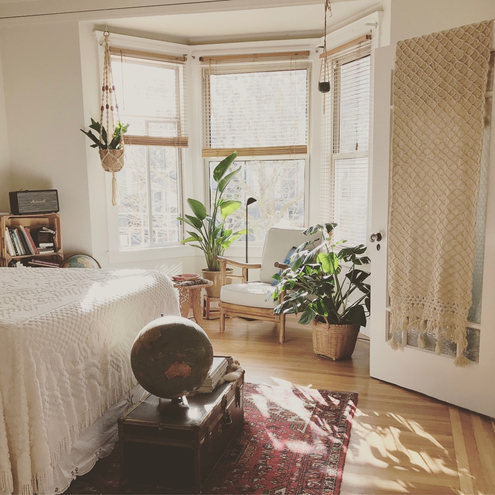 Piante Da Appartamento Ambiente Buio piante da interno archivi - pagina 2 di 3 - bottegabotanica
