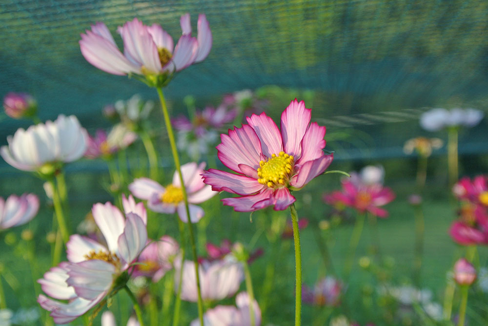 Fiori Km 0.Di Flower Farm E Fiori A Km 0 Bottegabotanica