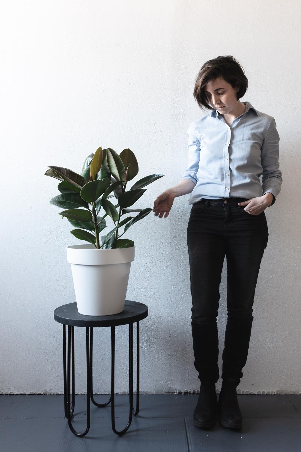 Potare Il Ficus Elastica come prenderti cura del tuo ficus - bottegabotanica